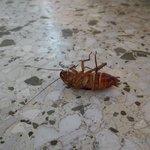 Kakerlaken - jetzt schon am Balkon