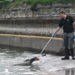 feeding the seals