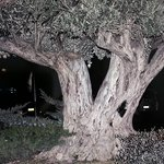 tree outside hotel