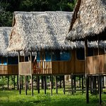A view of the bungalows (rooms) at Curassow Amazon Lodge.
