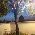 l'albero di ulivo illuminato