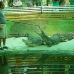 Guided Tour - Lets make the croc angry !