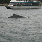 One of many whales we saw.