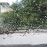 Bedroom window - good web access perhaps