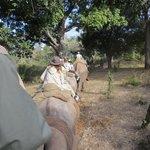 Safari trail ride