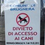 No cani