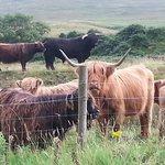 nearby livestock