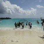 サンゴプロジェクト、貴重な体験させてもらいました
