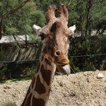 Parc à pied Girafe
