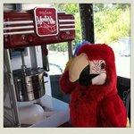 Scarlet enjoying the popcorn machine