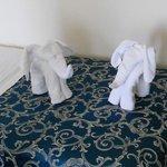 sorpresa! elefanti o asciugamani?