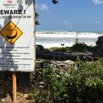 swimmers beware