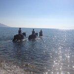 Rafael's swim with the horses