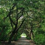 Lovely walkway