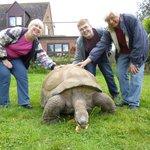 Feeding Jude the giant tortoise on the Tortoise Tour.