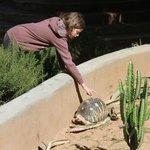 Resident Tortoises!