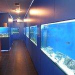 Baška aquarium