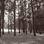 Black and White picture of woods within hotel grounds