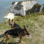 Old Harry Rocks with Draco and Scout