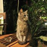 Jazz, the cat!