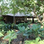 an oasis in the middle of Pongola