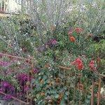 Jardim no quintal do hostel