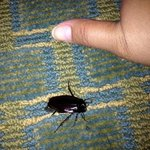 Roach we found in our room