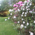 Flowers in Yew Tree Farm Garden