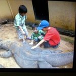 Komodo Cage, it has been with human since was born. so it is safe