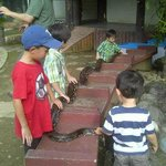 Snake, safer than Komodo