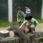 reptile park, here, its not Komodo... it is Lizard