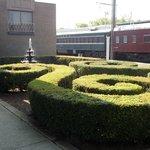 Bushes surrounding the TRAIN