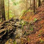 Appalachian Trail to the Bunion