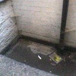 Vue de la chambre : fosse en béton pleine d'eau et d'ordures