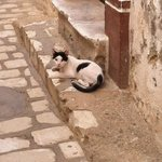 Local cat at the back of the Medina