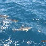 Delphin-Tour