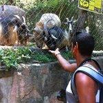 Feeding the animals