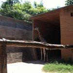 Giraffe time