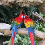 Huge variety of colourful birds