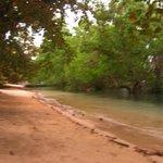 La plage derrière la mangrove
