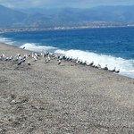 Mare di Milazzo e gabbiani pronti alla partenza