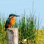 Martin pêcheur, le 17 août 2014, parc du Teich