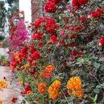 the beautiful flowers all around