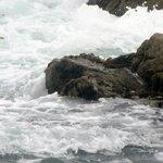Restless Sea, 17 mile drive, Monterey, Ca