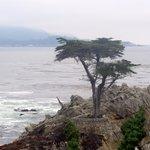 Lone Cypress, 17 mile drive, Monterey, Ca