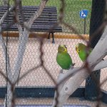 Beautiful birds near the pool
