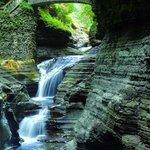 Falls in Watkins Glen