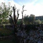 Vista oliveta