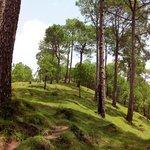 sanavar breezy hill