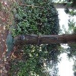 Eau Electricité au pied de l'arbre!!!!
